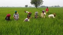 India's food security programme to cost $21 bn a year: Paswan