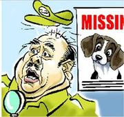 Dabra cops have a task at hand! Theyre searching for Cong MLA's missing dog