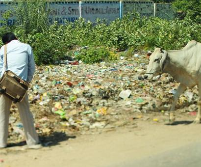 What PM needs to do about cows eating plastic