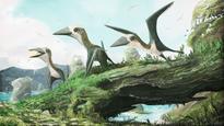 News Tiny pterosaur claims new perch on reptile family tree