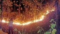 Nepal wildfires scorch 60,000 hectares of conserved forest