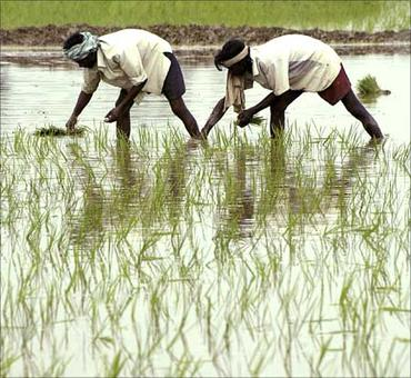 Drought-hit farmers are given sops to grow water-intensive crops!