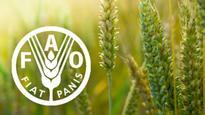 FAO Index rises again