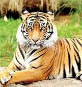 104 tigers at Kaziranga Tiger Reserve