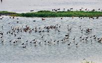Centre, states turn blind eye to wetlands