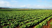 Organic Farming Mission: Maharashtra, Rajasthan and Others Follow Sikkim