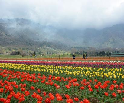 PHOTOS: Welcome to Asia's largest tulip garden in Kashmir