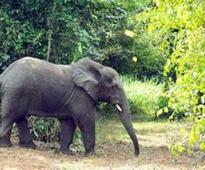 Families sleep on machaans to escape elephant attack