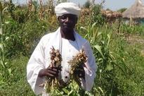 Sudan: Two UN agencies team up to help smallholder farmers, promo...