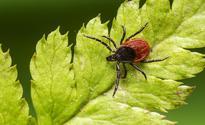 Over doctors objections, Legislature mandates coverage for long-term Lyme disease treatment