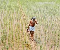 Farmers strike it rich, compensation tripled