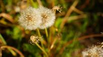 Manitoba pesticide ban needs provincial review, municipalities say