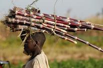 World sugar market balance shifts, adds pressure to prices