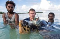 World Sea Turtle Day: Satellite Tags Reveal Migration Patterns of Endangered Hawksbill Sea Turtles, Show Alarming Results
