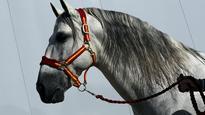 CBS Sci-Tech: Horses can read human facial expressions
