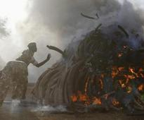Kenya burns vast piles of elephant tusks as it seeks ban on trade