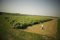 As per the prevailing exchange control laws, NRIs and PIOs cannot buy agricultural land in India