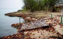 Crabs take over Cuba's Bay of Pigs