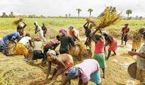 Farmers in a fix over fertiliser scarcity