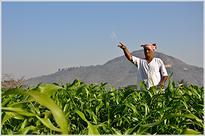 Govt taking concrete steps to solve debt problems of farmers: Radha Mohan Singh