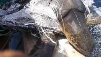 Plastic pollution poses a serious threat to marine biodiversity: WWF-Pakistan