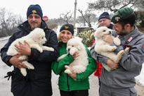 Rescue of puppies raises hopes in search for 22 at avalanche-buried Italy inn