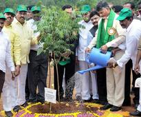 CM plans to tie marks and promotions to saplings