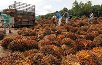 Golden Agri Seen Cheap LBO After Palm Oil Drop: Real M