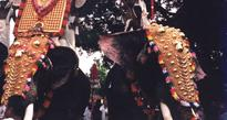 Outfit alleges elephant torture in local temple fest