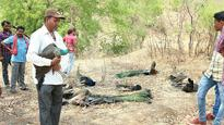 WATCH: 11 peahens and 4 peacocks found dead near Osmanabad