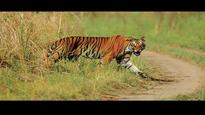 Tiger safari proposal in Corbett National Park red flagged, Uttarakhand asked to comply with wildlife norms