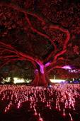 Vivid Sydney: Preview of world's largest psychedelic light show