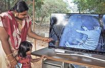 Tiger cubs enliven Tirupati zoo ambience