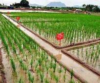 Rain shortfall: Agri varsity begins drought mitigation measures