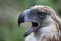 DENR urges public to help preserve Philippine Eagle habitat in Leyte