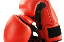 Boxer's death: Clot on her head reveals use of inferior head gear