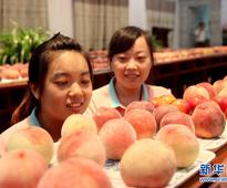 Peach dates back 2.6 mln years: research
