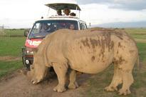 Kenya, Tanzania in joint probe after black rhino killed in Maasai Mara