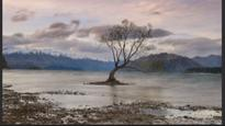 Lake Wanaka tree attracts photographers from around the world
