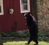 DOCUMENT: Photos Appear To Show Late Bipedal Bear