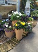 Stewart Garden inspires Scotsdales Garden Centre to boost planter sales