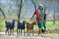 Poverty-stricken woman sells off goats to construct toilet