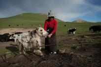 Traditions endure for Tibetan nomads