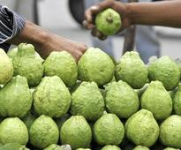 Eye for guava, says AIIMS