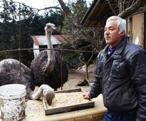 This Is How One Man Is Helping Thousands Of Abandoned Animals Survive After Fukushima Nuclear Disaster