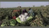 Pakistan likely to allow cotton import from India with tough conditions