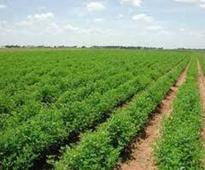 Govt allocates Rs163b for agriculture