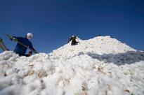 Mills, traders buy bulk of cotton arrival