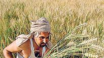 Falling commodity prices to deepen farm sector crisis in 2016-17: Niti Aayog