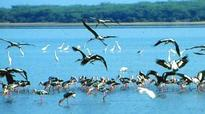 Struggle for survival for Chilika lake faces threats